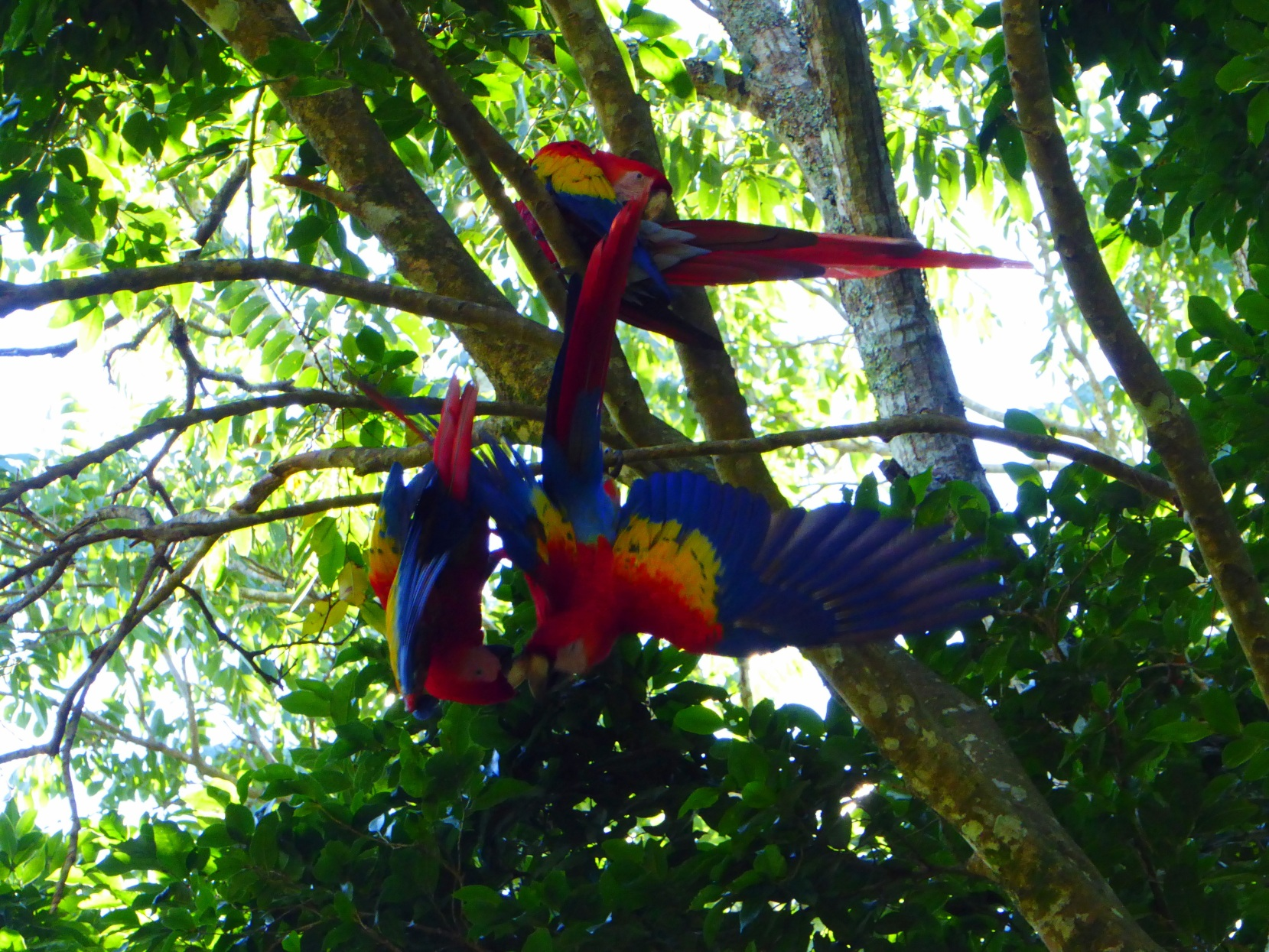 macaws3